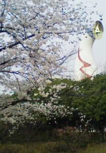 太陽の塔と桜