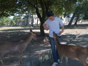 奈良公園の鹿と戯れる
